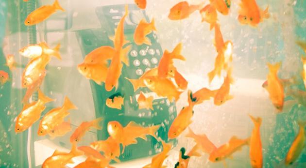 image poissons