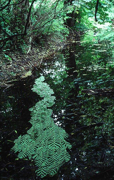 Andy Goldsworthy - Land Art